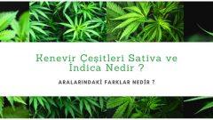 Kenevir Çeşitleri Sativa ,İndicave Ruderalis Nedir ? Aralarındaki Farklar Nedir ?